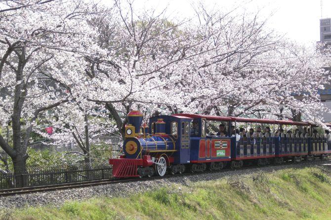 碧南市明石公園【碧南】 乗りもの1回100円とお得に遊べて嬉しい。 | 桜 ...