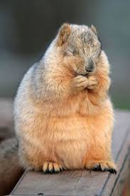 フリー画像素材] 動物 1, 栗鼠・リス, 動物 - 目を閉じる, 祈る, 動物 ...