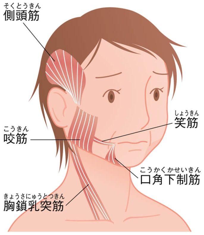 老け見え顔の原因はストレスによる「食いしばり」 (2/2):日経doors ...