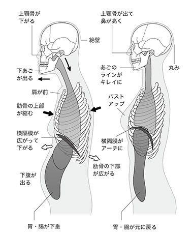 面長・しゃくれを自力で改善「1分小顔矯正術」内臓下垂を正すと顔が ...