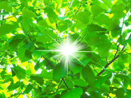知って得する季語」──5月は「新緑」をたっぷり浴びよう(tenki.jp ...