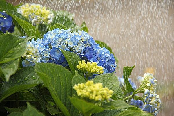 この時期に気をつけたい、梅雨の時期特有のだるさ「梅雨だる」って ...