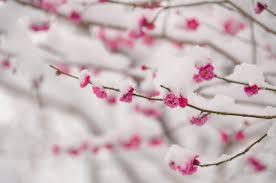 二月の古名「如月」、またの名は「梅見月」。春遠からじと咲くこの花の ...