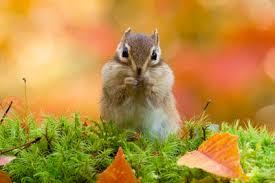 秋特集 - 豊かな秋。 | 写真素材・ストックフォトのアフロ