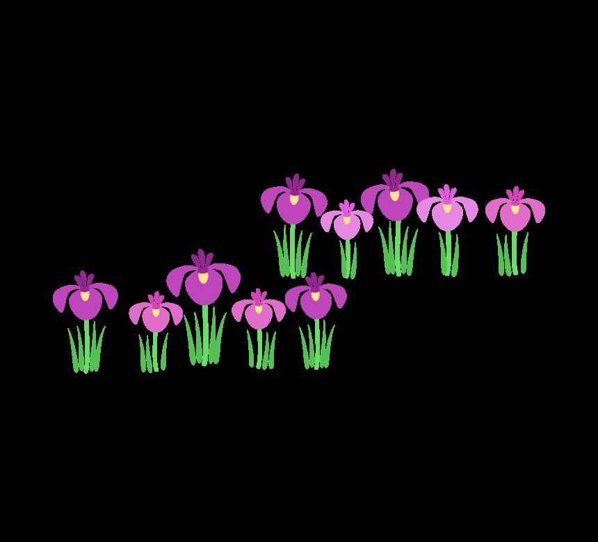 こどもの日 並んだ菖蒲の花のイラスト   フリー素材 イラストミント