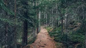 無料画像 : 森林, パス, 荒野, トレイル, ジャングル, 土壌, リッジ ...