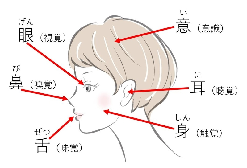 六根(眼耳鼻舌身意)と六境(色声香味触法)と六識の意味 - 禅の視点 ...