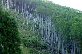 日本の林業の現状