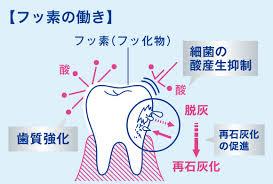 むし歯を防ぐ「フッ素」の働き|歯の健康基礎知識|ライオン
