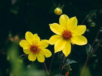 ギョリュウバイの花の写真(画像)を無料ダウンロード - フリー素材の ...