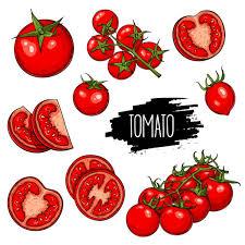 ミニトマト イラスト素材