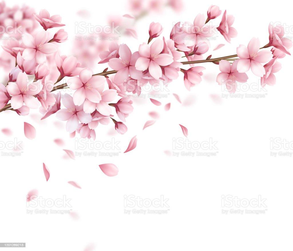 桜桜の花作りリアル - 1970~1979年のベクターアート素材や画像を多数 ...