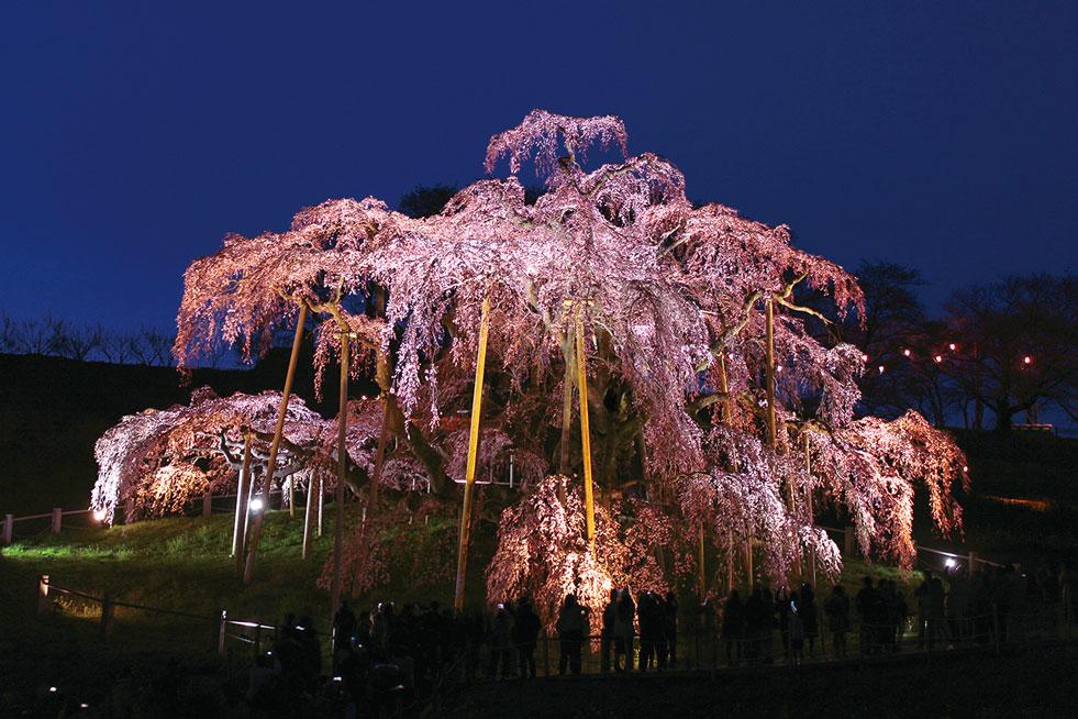 三春町にある桜の名所スポット9選!2018は三春滝桜以外も。