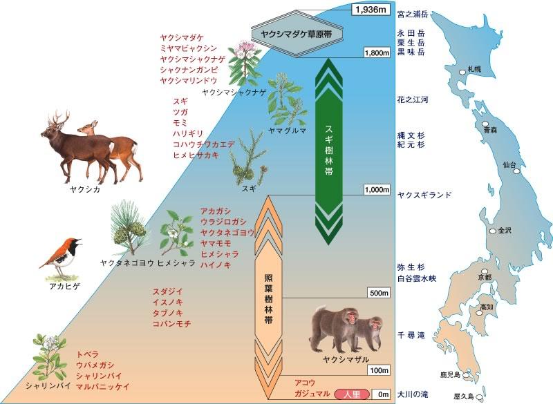 日本の世界自然遺産:屋久島