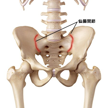 腰痛の原因はこれ! ③仙腸関節の問題   脳梗塞リハビリステーション ...
