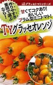 フタバ種苗 野菜の種子 TYグラッセ·オレンジ 種子 1000粒:種苗·園芸 ...
