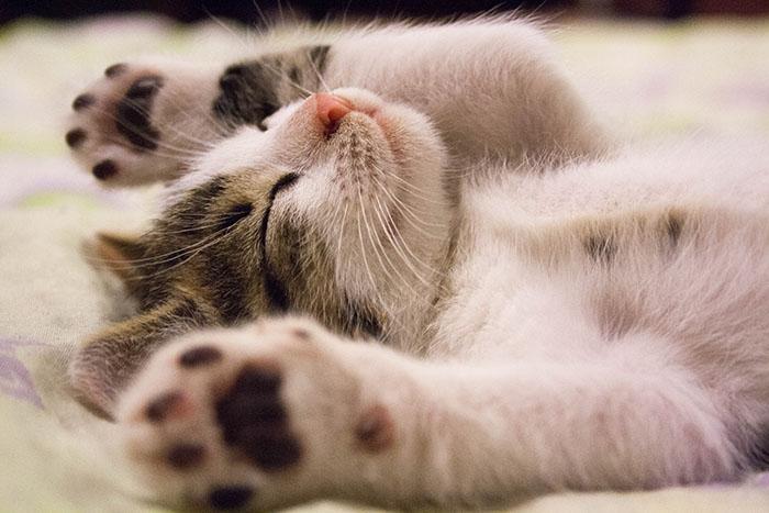 意識高い系お断り。かわいいい癒しの猫画像フリー素材まとめ【無料高 ...