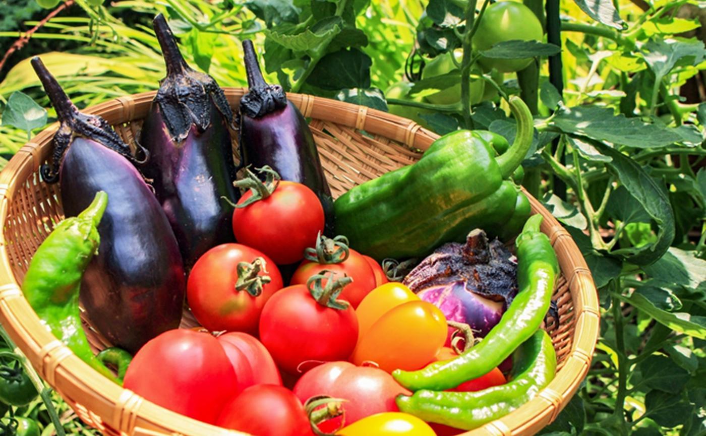 レシピ付き】夏野菜の種類や特徴を専門家が解説!トマトは夏野菜じゃ ...