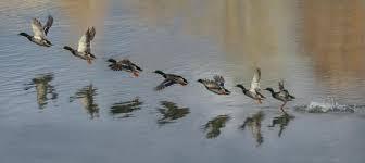 慣用句】「立つ鳥跡を濁さず」の意味や使い方は?例文や類語をWeb ...