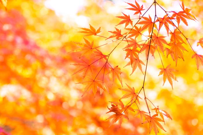 保存版】今年の見頃はいつ?秋の鎌倉散策へ<紅葉の名所・見所案内 ...