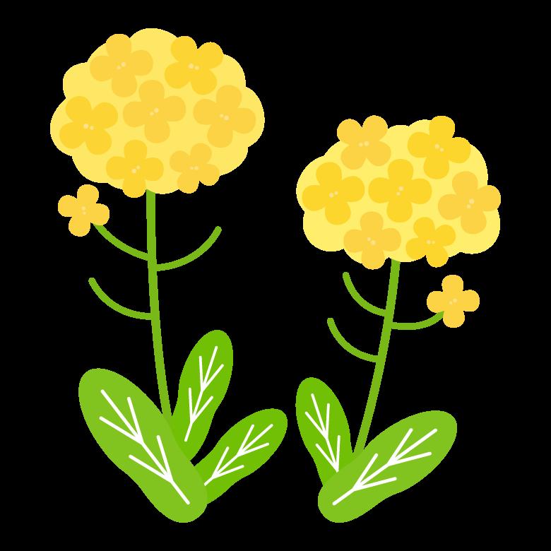 菜の花のイラスト   無料のフリー素材 イラストエイト