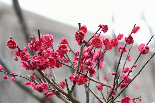紅花の写真素材|写真素材なら「写真AC」無料(フリー)ダウンロードOK