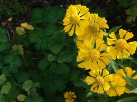 3497ページ目   花・植物 写真素材なら「写真AC」無料(フリー ...