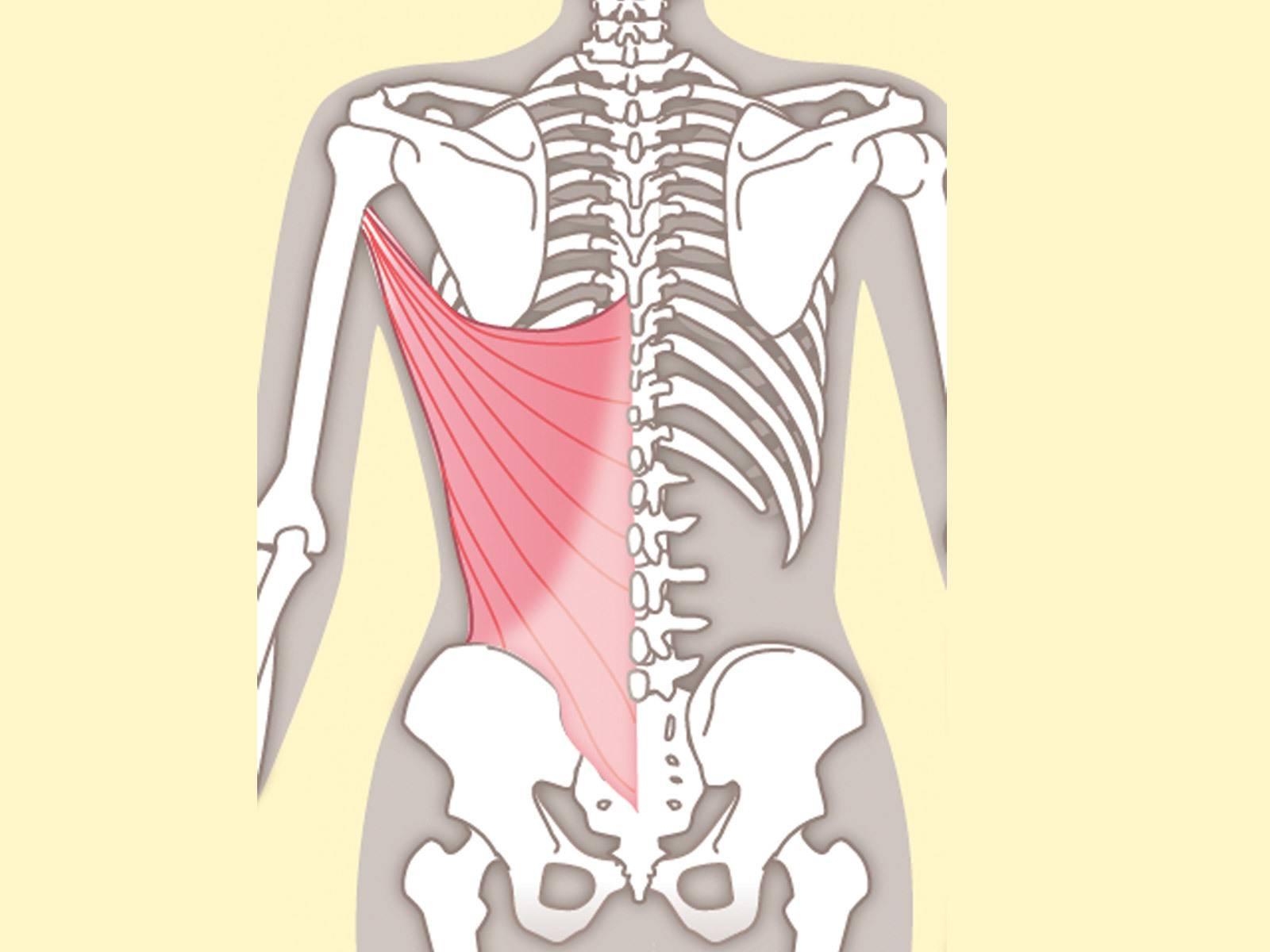 たった1分で「ガチガチ肩甲骨」が柔軟に!【前鋸筋・菱形筋・広背筋 ...