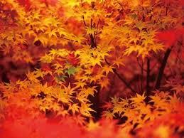 和の暦】霜月 11月2日「楓蔦黄」七十二候 第54候 ──野山が美しい錦繡 ...