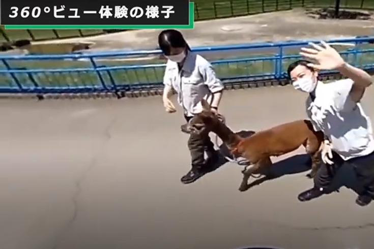 自動運転ロボ「RakuRo」で千葉市動物公園の動物たちをネットから鑑賞 2 ...