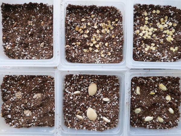 捨てている種から芽は出る?【脱枯れ専のベランダ畑】