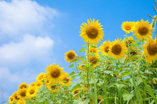 夏の写真素材|写真素材なら「写真AC」無料(フリー)ダウンロードOK