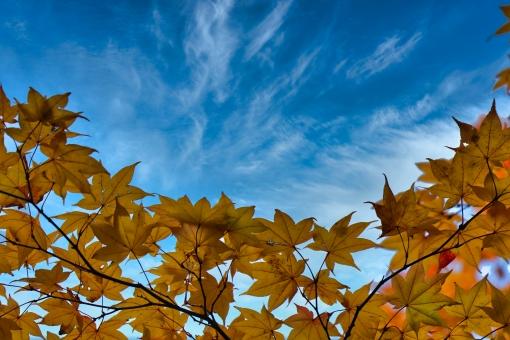秋の風景の写真素材|写真素材なら「写真AC」無料(フリー)ダウンロードOK