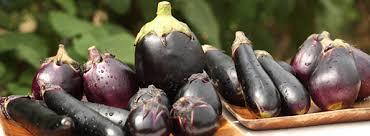 旬を味わう ―秋茄子― | くらしの良品研究所 | 無印良品