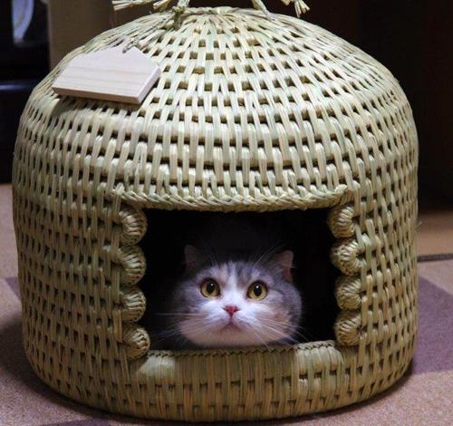 猫つぐら(猫ちぐら)をご家族へのプレゼントに - 猫堂ブログ ショップ情報