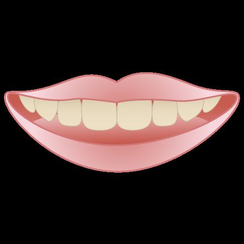 ステイン イラスト一覧【歯科素材.com】歯医者さん向け無料イラスト