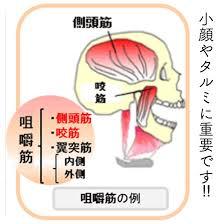 4つの筋肉からなる咀嚼筋は重要な役割を占めている(2018年01月03日 10 ...