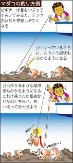夏にお手軽! 佐島湾のマダコ&根魚リレー   オフショアマガジン ...