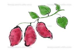 手描きイラスト素材 植物 さつまいも, サツマイモ, さつま芋(144888824 ...