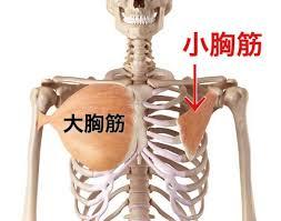 猫背になっちゃう「巻き肩」を簡単に治す簡単エクササイズ | 女子SPA!