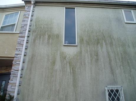 放置は危険!外壁のコケ正しい対処・お手入れ方法と2つの予防策