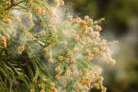 花粉症がつらい…悪化させないためにできる対策とは? からだカイゼン ...