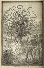 食人木 - Wikipedia