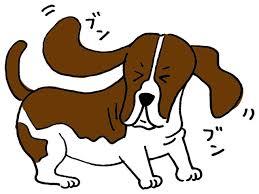 しつこく頭を振る[犬の病気事典]|PETomorrow(ペットゥモロー)