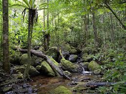 アツィナナナの雨林 マダガスカル 世界遺産オンラインガイド