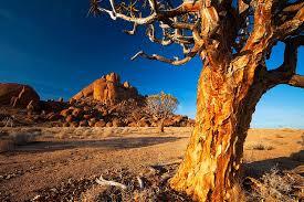 リフタスフェルトの文化的・植物的景観|南アフリカ|世界遺産 ...