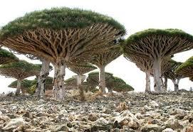 ソコトラ諸島|イエメン|世界遺産オンラインガイド