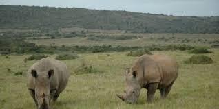 ガランバ国立公園|コンゴ民主共和国|世界遺産オンラインガイド