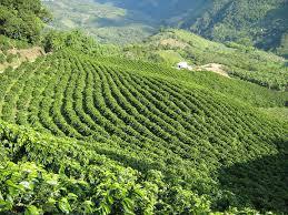 コロンビアのコーヒー産地の文化的景観  世界遺産オンラインガイド