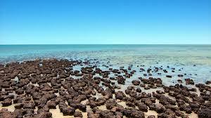 西オーストラリアのシャーク湾 |世界遺産オンラインガイド